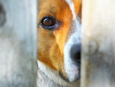 I Have a Guard Dog: Is That Enough to Secure My Home?